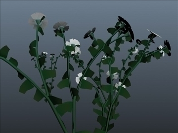 daisy flower set 001 3d model 3ds max obj 102700