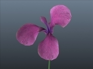 russian iris set 001 3d model 3ds max obj 102835