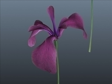 russian iris set 001 3d model 3ds max obj 102836