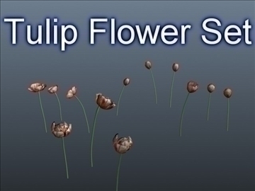 tulip flower set 001 3d model 3ds max obj 102924