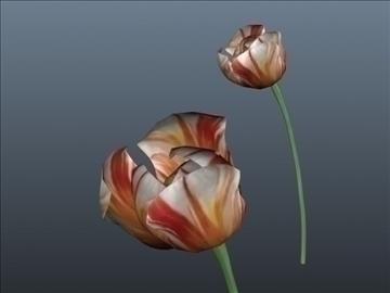 tulip flower set 001 3d model 3ds max obj 102925
