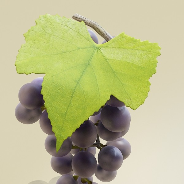 3D Model Grapes Collection High Detailed ( 52.32KB jpg by VKModels )