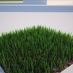 3D Grass Textured Lawn Turf Yard for Backyard etc. ( 84.89KB jpg by 5starsModels )