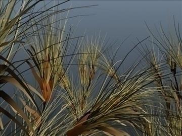 cactus grass set 001 3d model 3ds max obj 103055