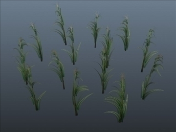 corn plant set 001 3d model 3ds max obj 103188