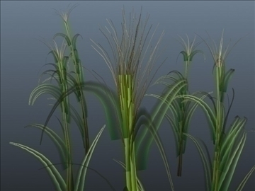 corn plant set 001 3d model 3ds max obj 103189