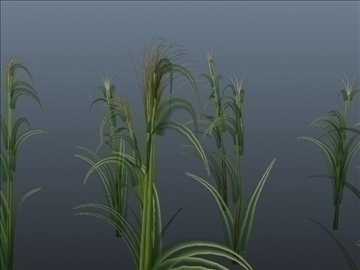 corn plant set 001 3d model 3ds max obj 103190