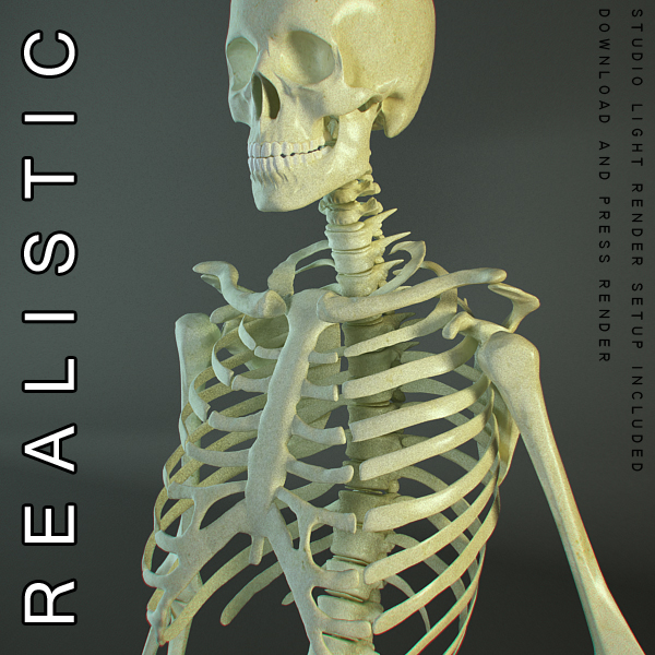 HD Skeleton of a Human 3D Model | FlatPyramid