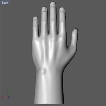 male hand 3d model 3ds dxf fbx c4d x obj 89008