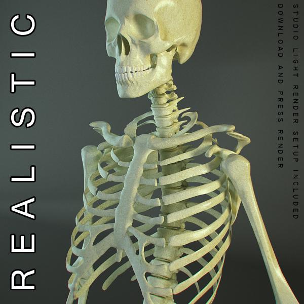 cilvēka 3d modeļa skelets 3ds max dxf fbx c4d lwo ma mb hrc xsi faktūra obj 118397