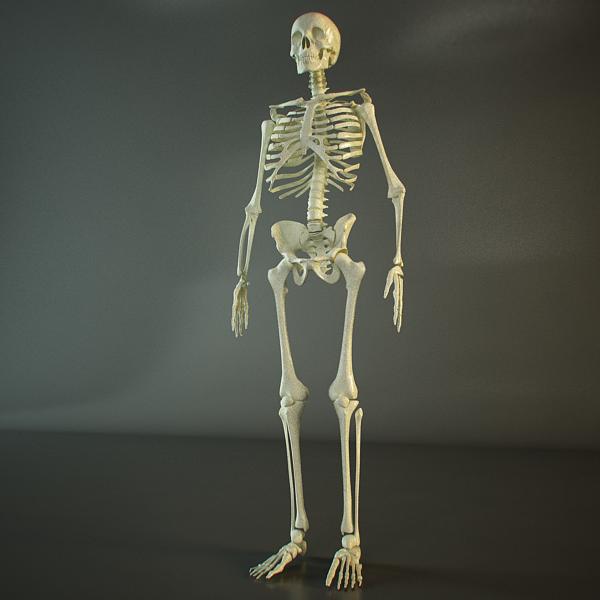 skeleton of a human 3d model 3ds max dxf fbx c4d lwo ma mb hrc xsi texture obj 118398