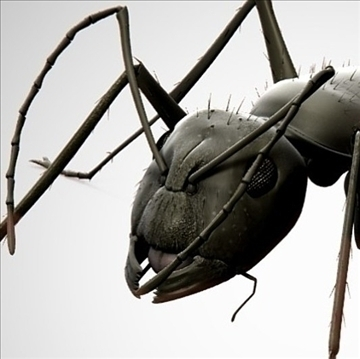 ant bug 3d model blend obj 112068