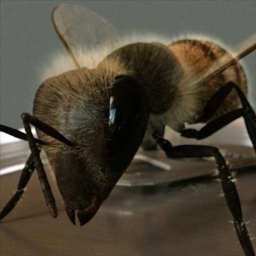med pčela 3d model 3ds 106520