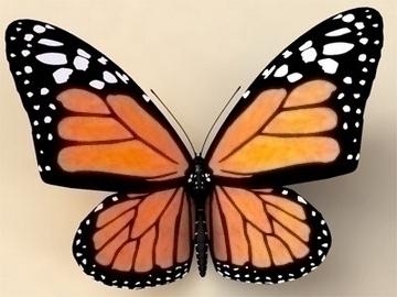 monarch 3d model 3ds max lwo obj 81675
