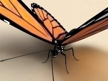 monarch 3d model 3ds max lwo obj 81676