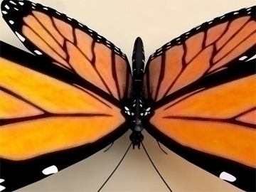 monarch 3d model 3ds max lwo obj 81677
