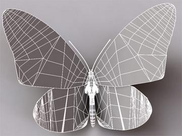 monarch 3d model 3ds max lwo obj 81678