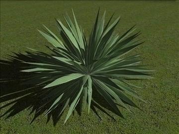 angustifolia 3d मॉडल अधिकतम 97616