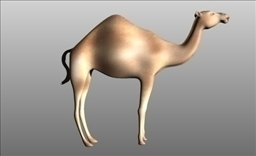 animal camel 3d model cob 103663