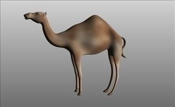 animal camel 3d model cob 103664