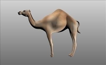 animal camel 3d model cob 103665