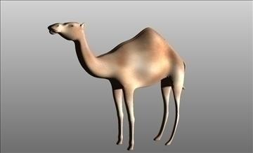 animal camel 3d model cob 103666