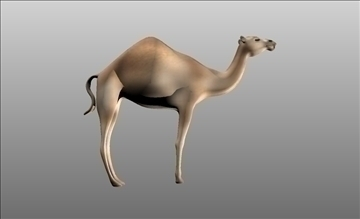 animal camel 3d model cob 103667