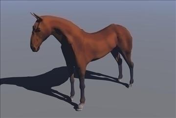 horse v3 3d model max 91704