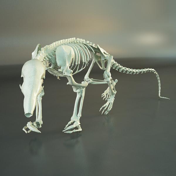 rat skeleton hd quality 3d model 3ds max dxf fbx c4d dae x lwo ma mb 3dm hrc xsi  texture wrl wrz obj 118340