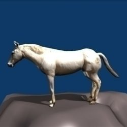 white horse ( 29.68KB jpg by vivekc )