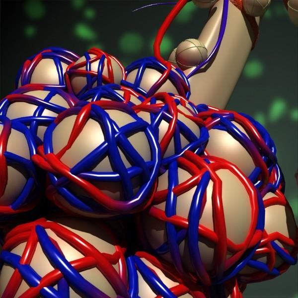 3D Model Alveoli Anatomy 3d model max fbx obj 132322