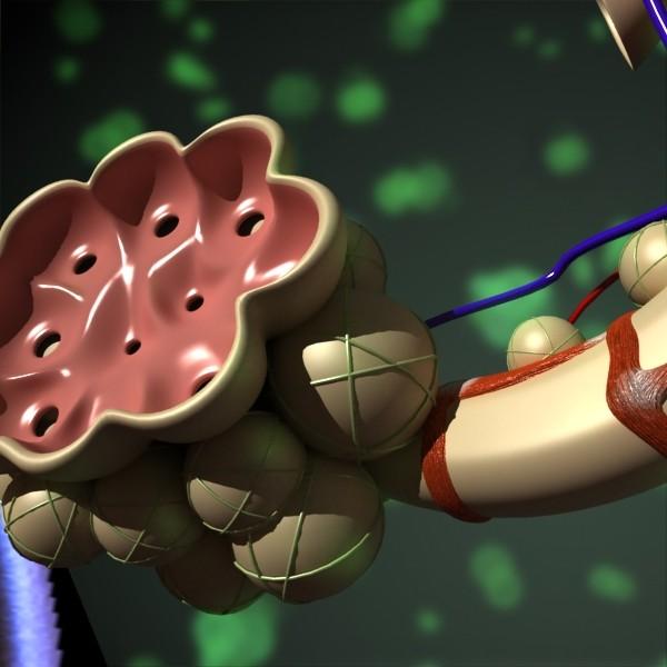 3D Model Alveoli Anatomy 3d model max fbx obj 132323