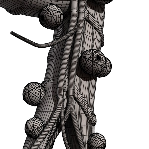 3D Model Alveoli Anatomy ( 83.55KB jpg by VKModels )