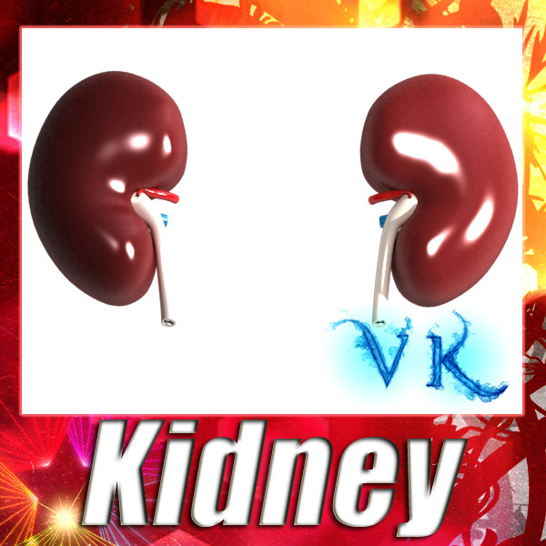 3D Model Human Kidneys High Detail ( 94.92KB jpg by VKModels )