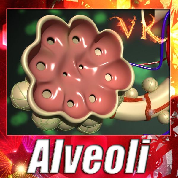 alveoli anatomy 3d model max fbx obj 132311