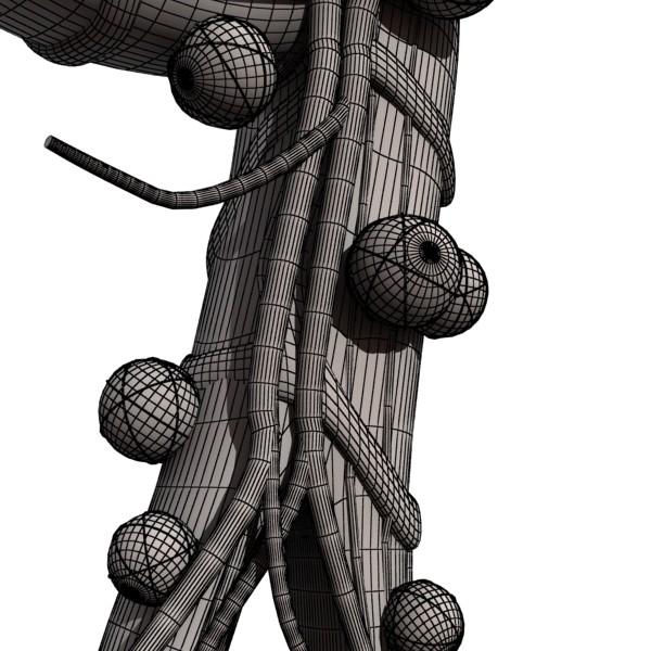 alveolių anatomija 3d modelis max fbx obj 132331