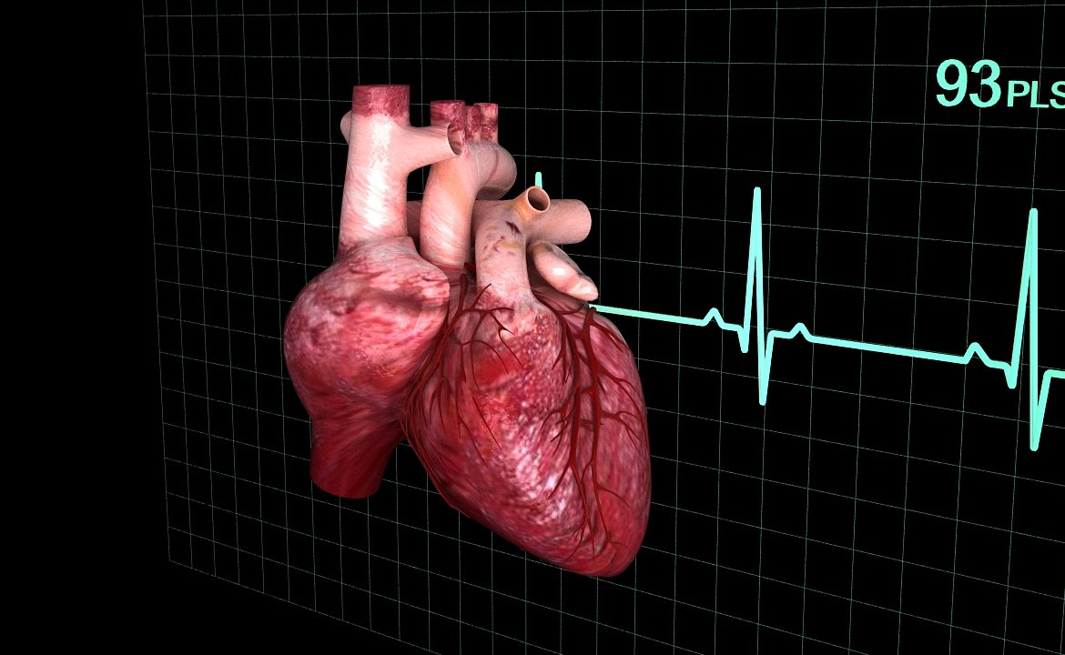 Human heart (animated) ( 352.22KB jpg by S.E )