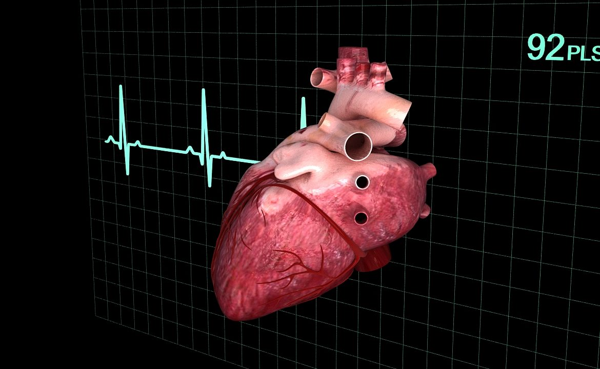 Human heart (animated) ( 340.34KB jpg by S.E )