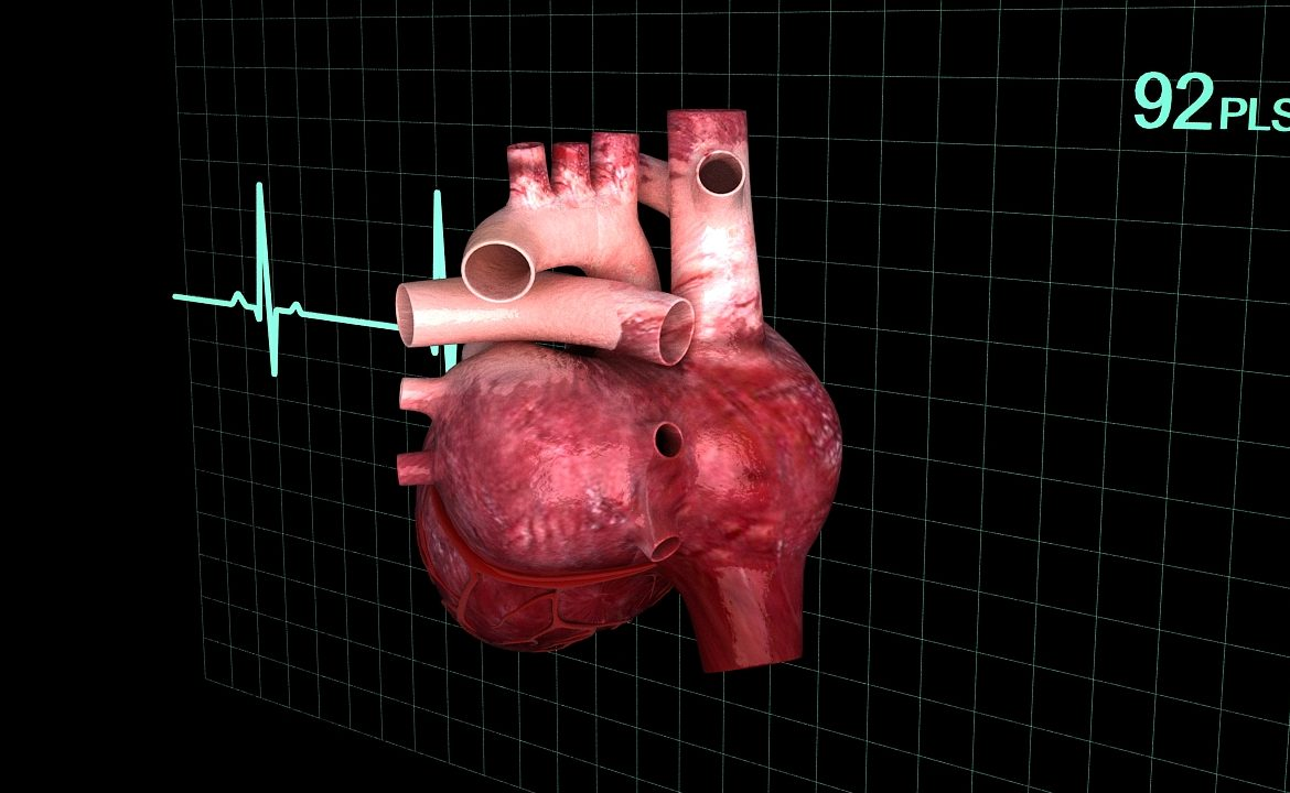 Human heart (animated) ( 340.07KB jpg by S.E )