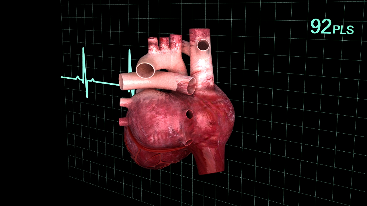 Human heart (animated) 3D Model | FlatPyramid