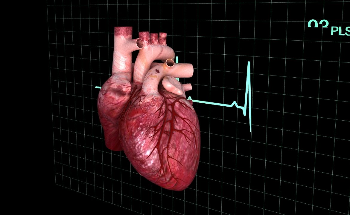 Human heart (animated) ( 335.37KB jpg by S.E )