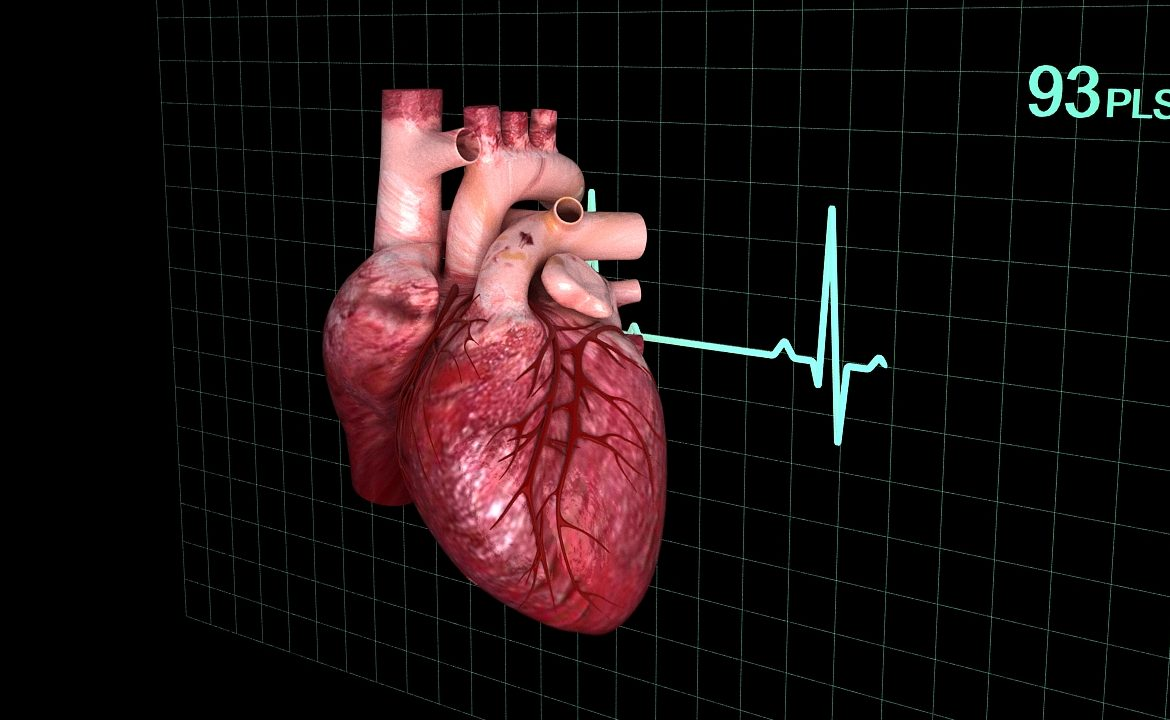 Human heart (animated) ( 337.89KB jpg by S.E )