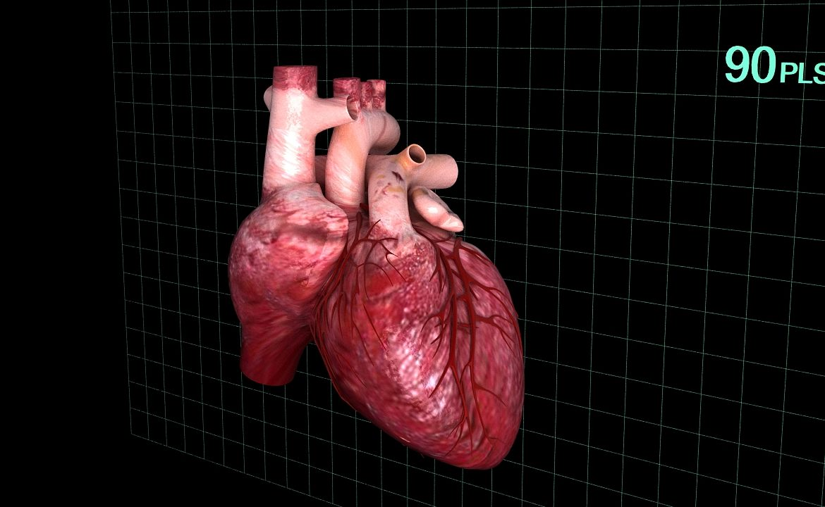 Human heart (animated) ( 339.62KB jpg by S.E )