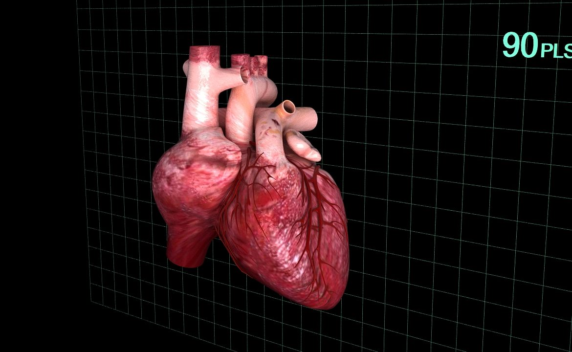 Human heart (animated) ( 333.93KB jpg by S.E )