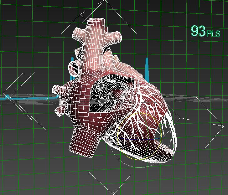 Human heart (animated) ( 118.32KB jpg by S.E )