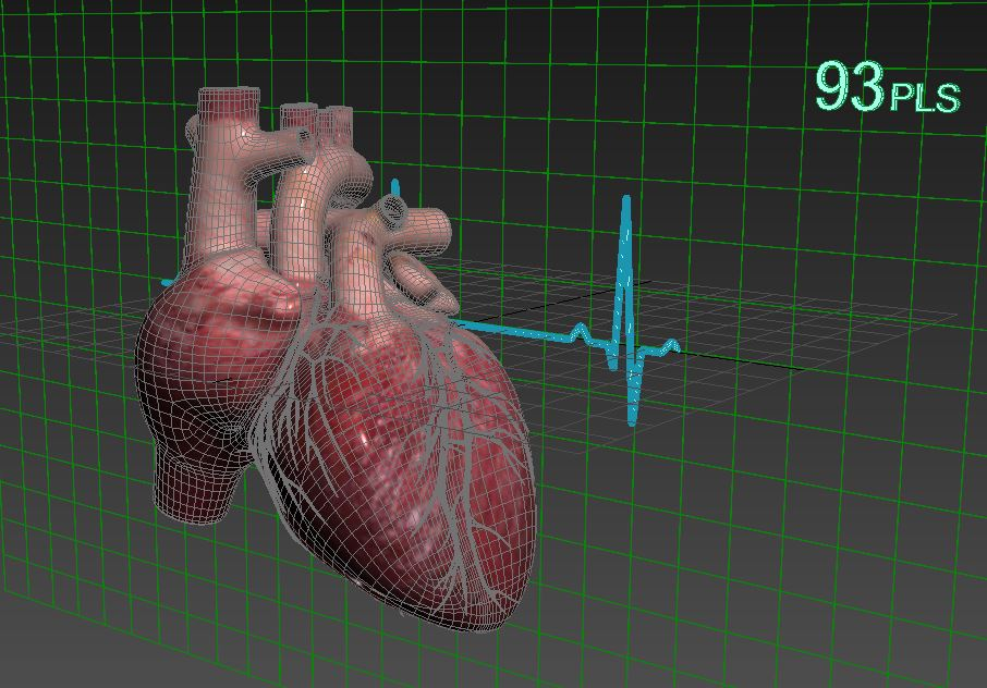 Human heart (animated) ( 107.03KB jpg by S.E )
