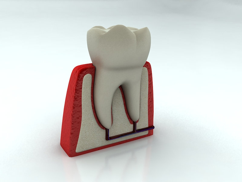 tooth 3d model max 150310