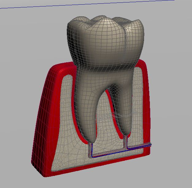 tooth 3d model max 150312