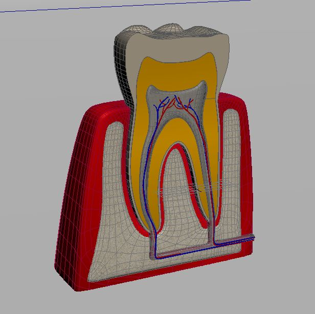 tooth 3d model max 150313