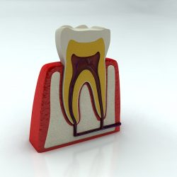 Tooth ( 183.01KB jpg by S.E )